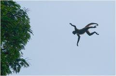 Können Affen fliegen ?
