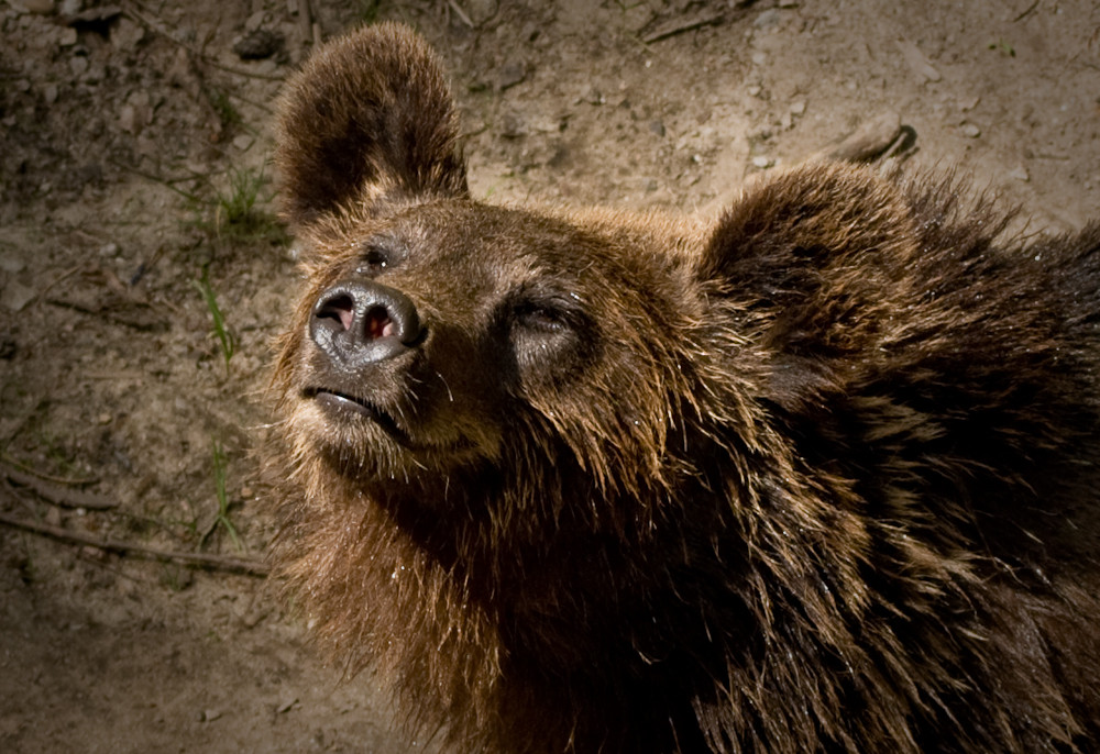 Können Bären träumen...