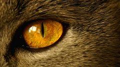 Können diese Augen lügen