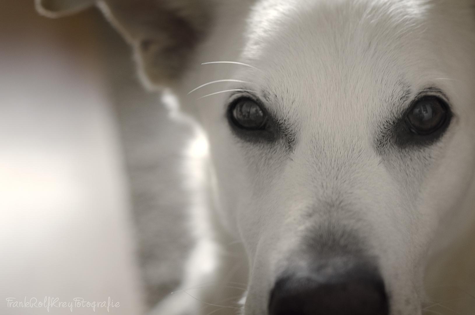 Können diese Augen lügen ?