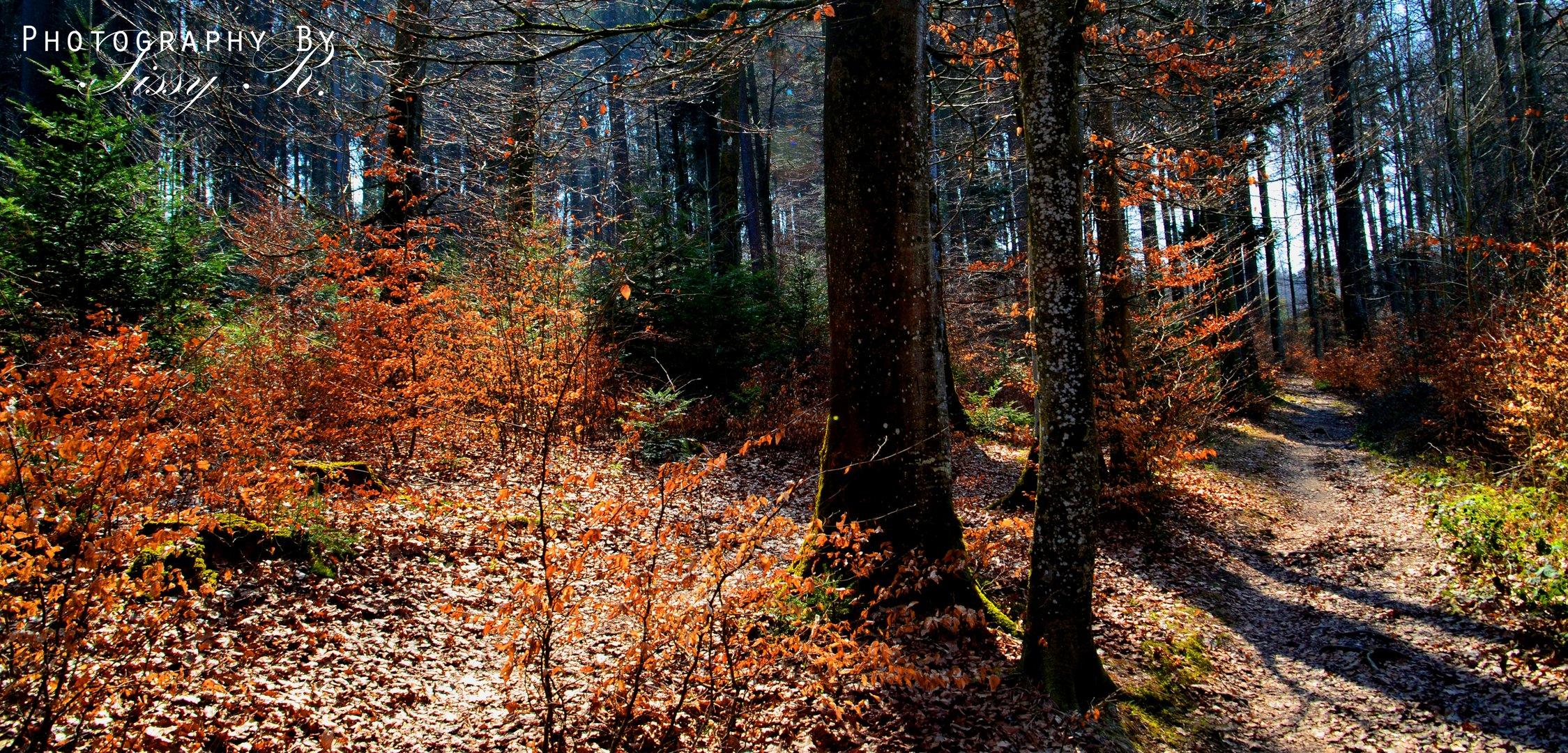 Könzibergwald