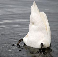 Köpfchen in das Wasser, Schwänzchen in die Höh`...