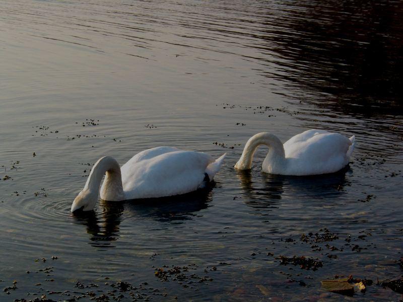Köpfchen in die See