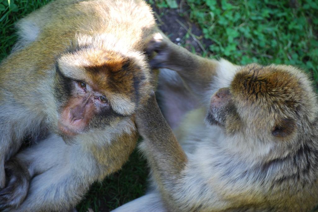 Körperpflege bei Tieren