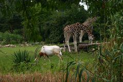Koexistenz in der AFRIKA-Savanne im Leipziger ZOO