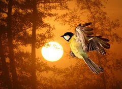 Kohlmeise im Sonnenaufgang