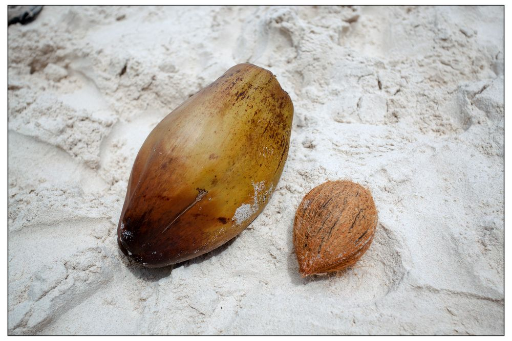 Kokosnuss vor und nach dem Schälen