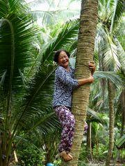 Kokospalmen klettern