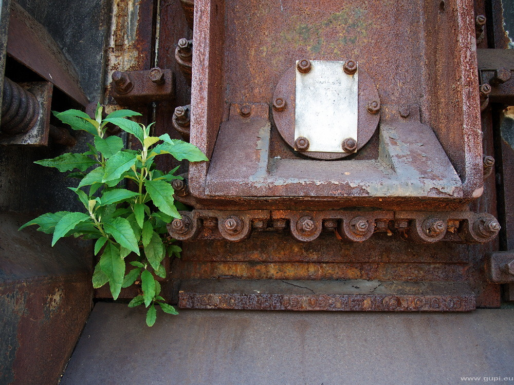 Koksbatterieofentürbegleitgrün