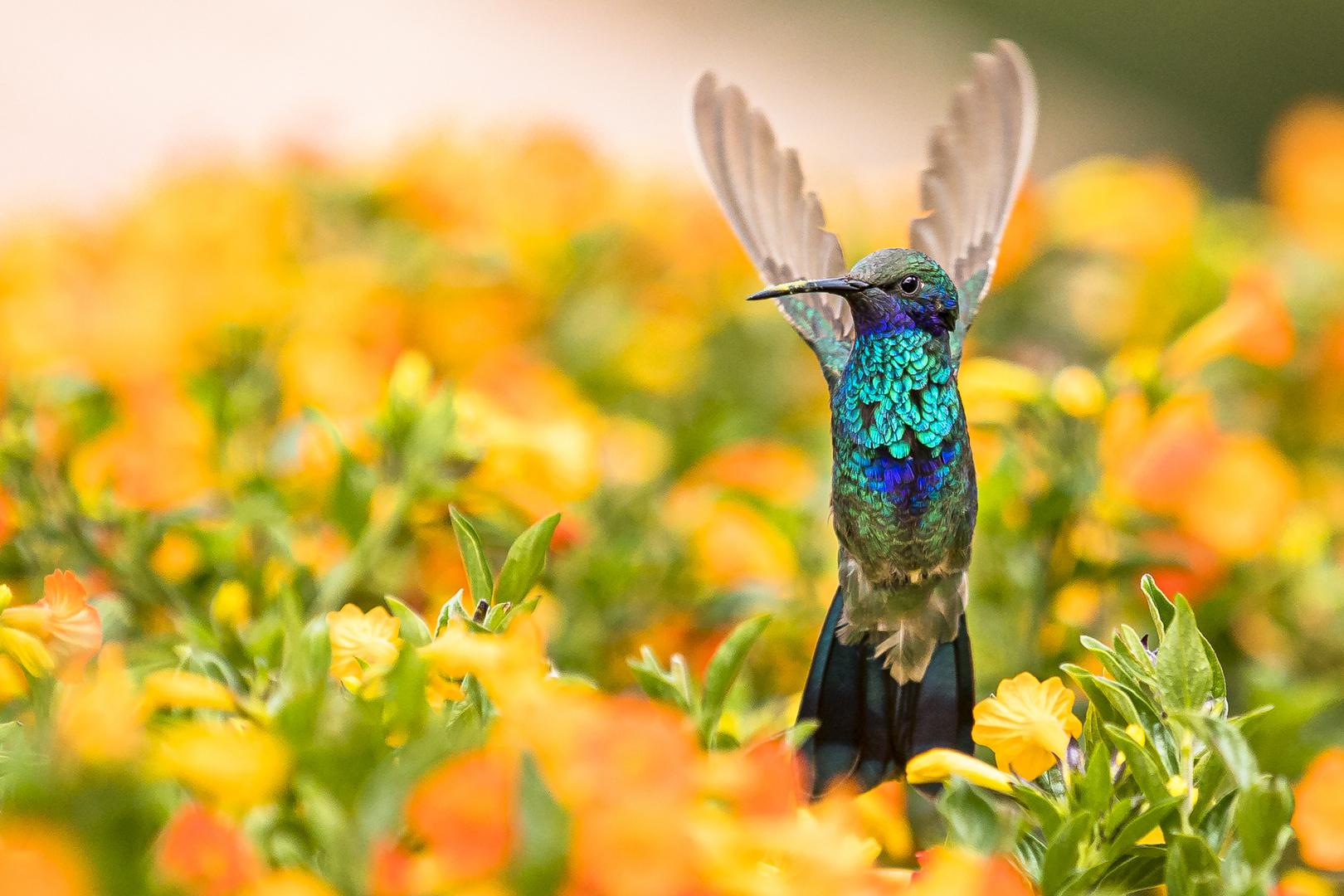 триммер партнер колибри 2