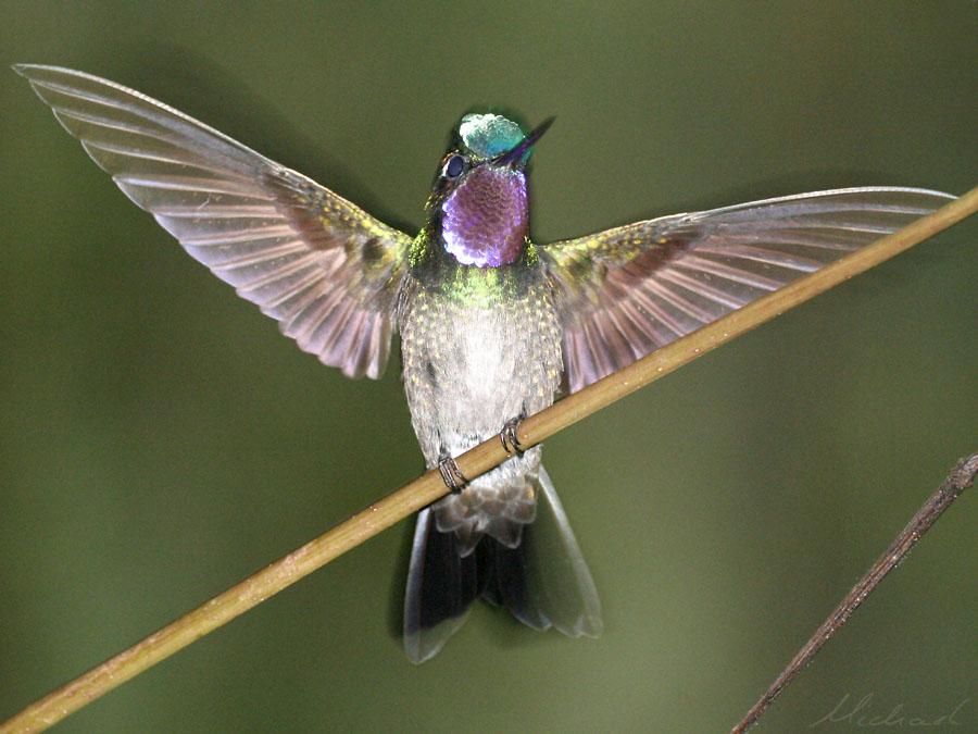 Kolibri extrem