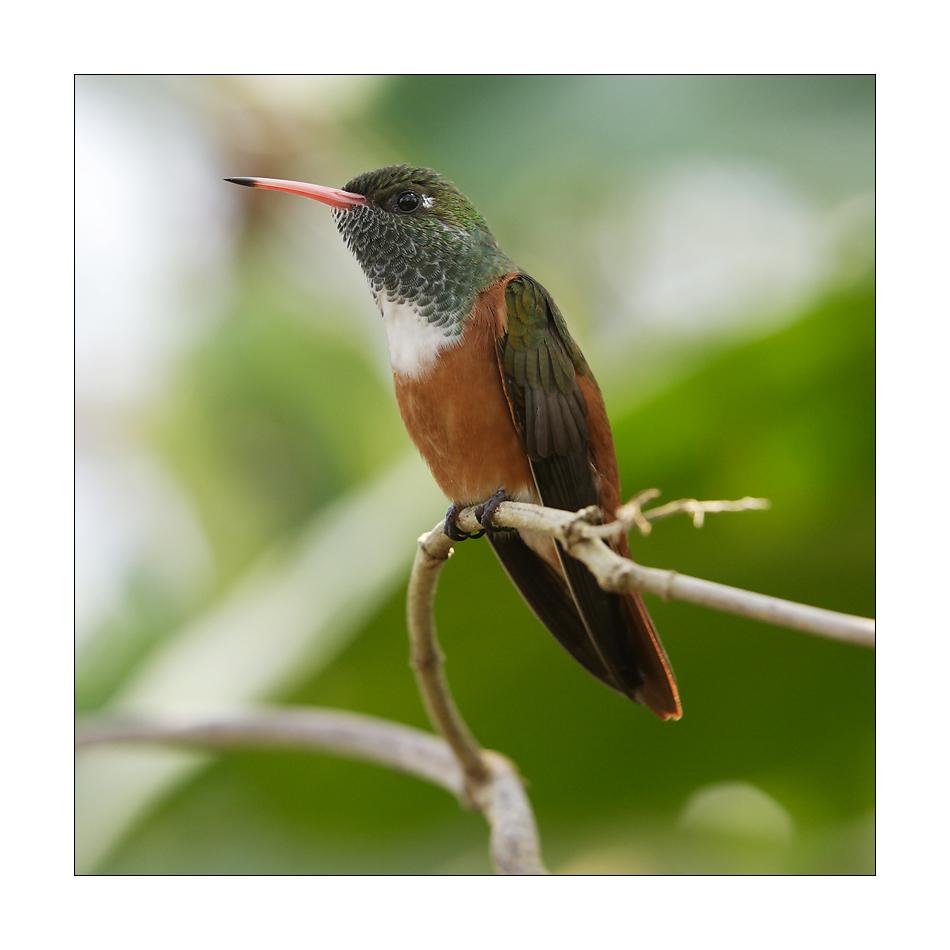 [ kolibri ]