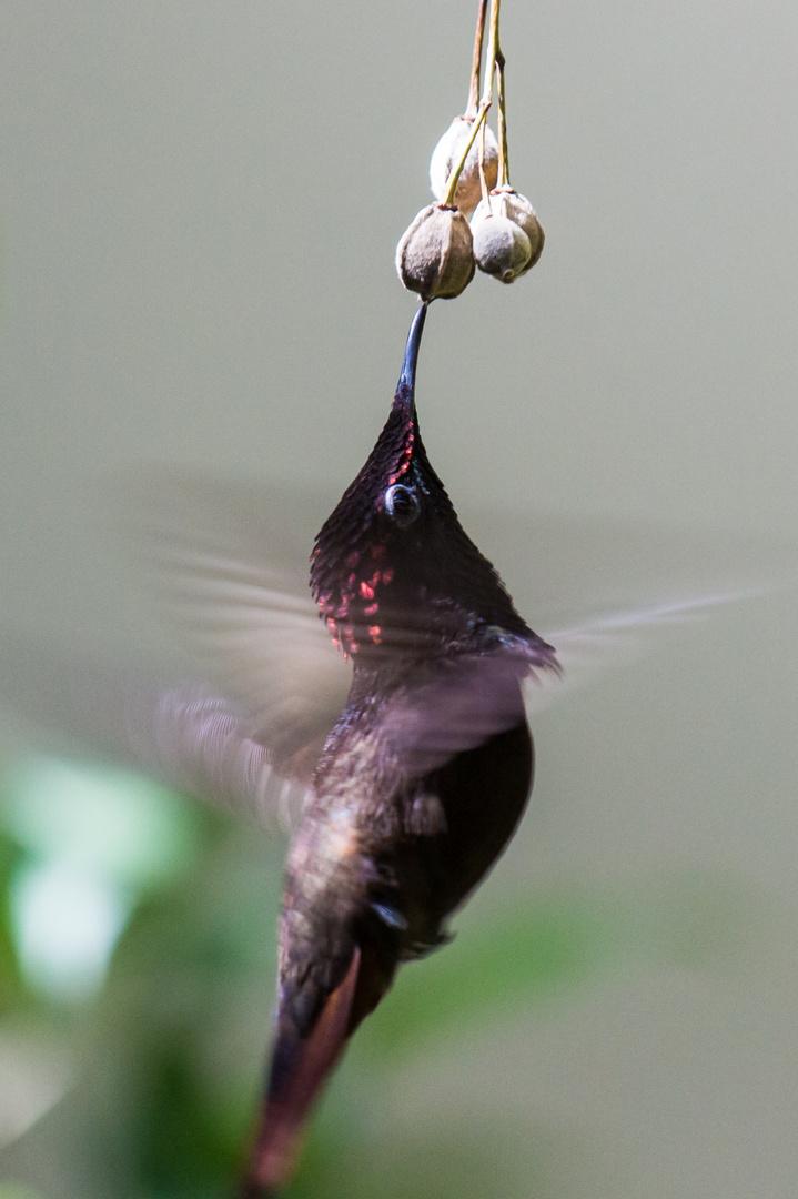 Kolibri in Action