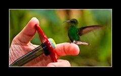 Kolibri und Zuckerwasser, Costa Rica