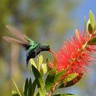 Kolibri27