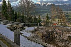 Kolsassberg, Tirol