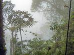 Kolumbien - Artenvielfalt