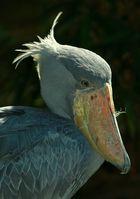 Komische Vögel, ach Quatsch
