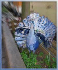 Komische Vögel gibt's in Kreuzberg! ;o)