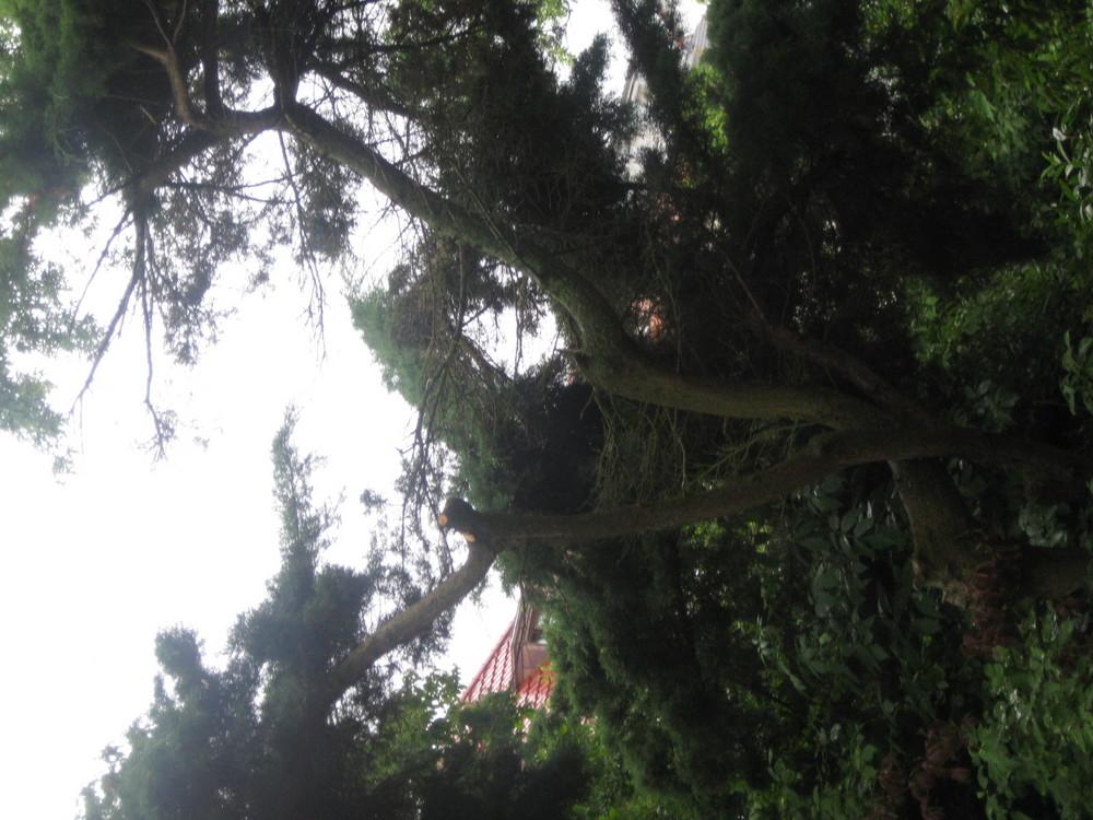 Komischer Baum