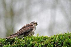 Komischer Vogel