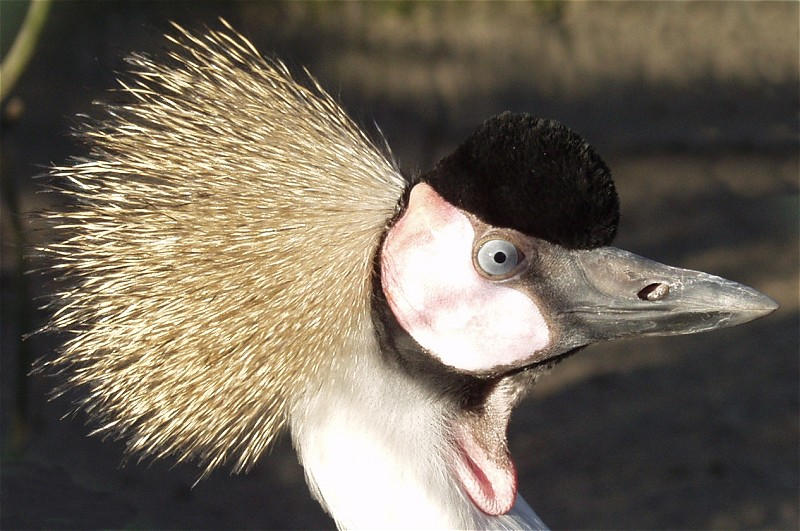 Komischer Vogel...