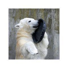 """Komisches """"Telefon"""" ..."""