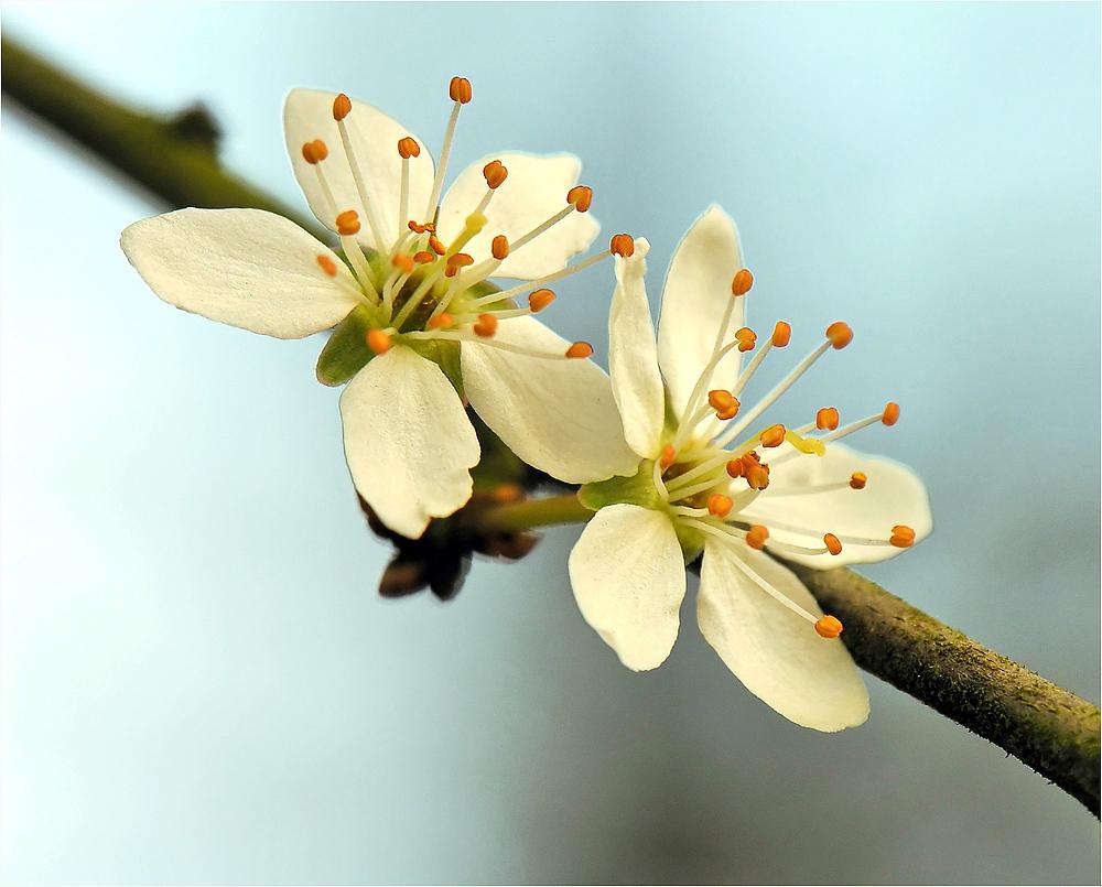 Komm, Frühling, komm!