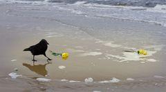 Komm großer schwarzer Vogel, komm ...