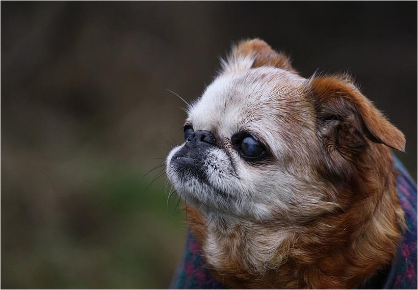 Komm Laß Uns Leben Foto Bild Tiere Haustiere Hunde Bilder
