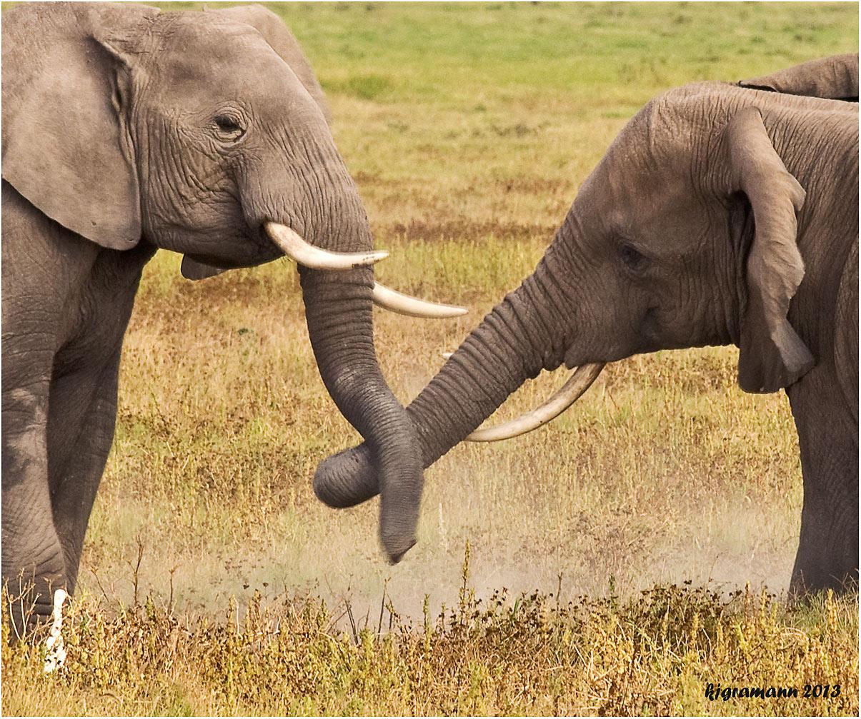 Komm Lass Uns Wieder Vertragen Foto Bild Africa Eastern