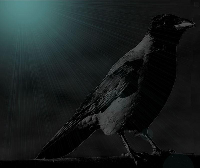 Komm schwarzer Vogel , nein lass dir noch Zeit