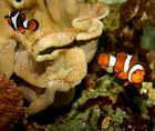 Komm sofort zurück, Nemo