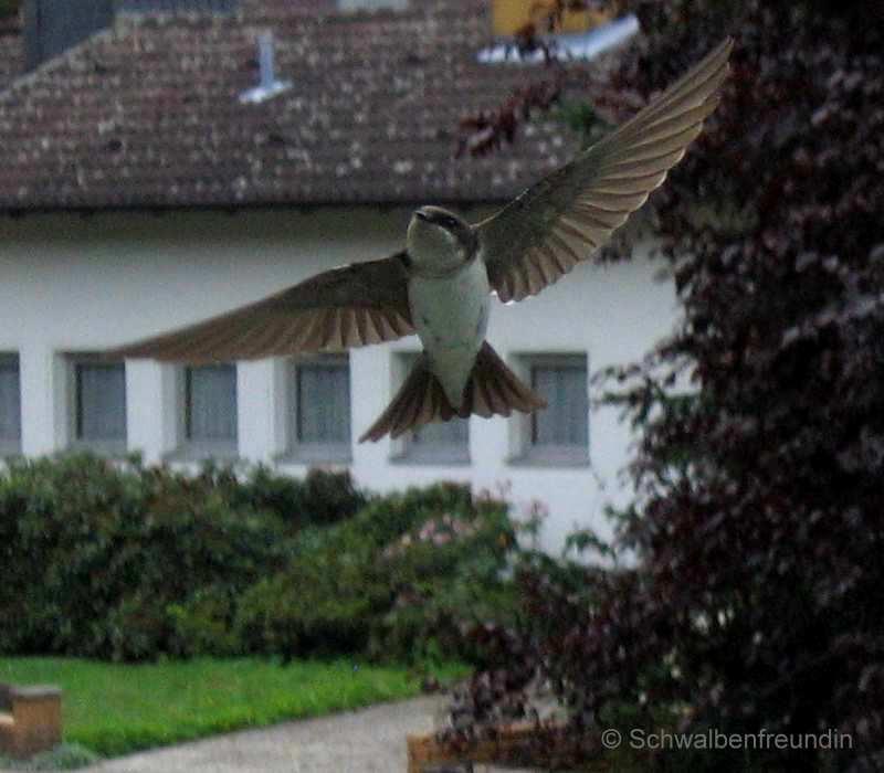 """"""" Komm' zur Mutti ;-) """" ~~~ Flug in die Linse ~~~"""