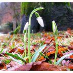 Kommt der Frühling?