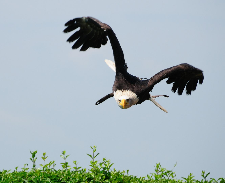 kommt ein Vogel geflogen.......