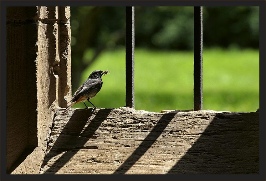 ... kommt ein Vogel geflogen …