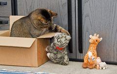 Kommt in meine Kiste
