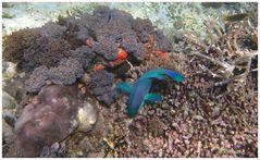Komodo/Indonesien- Am Riff