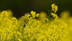 Komposition in Gelb
