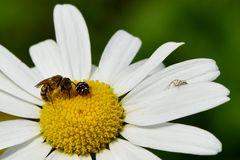 Konferenz der Insekten