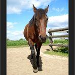 Konfuzius sagt: Auch 500 Pferdchen fangen mit dem ersten an. (Gemeinschaftsprojekt)