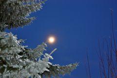 Koniferen bei Mondschein und von meiner besseren Hälfte für stimmungsvoll empfunden