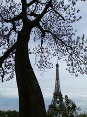 ...Konkurrenz; Baum und Turm