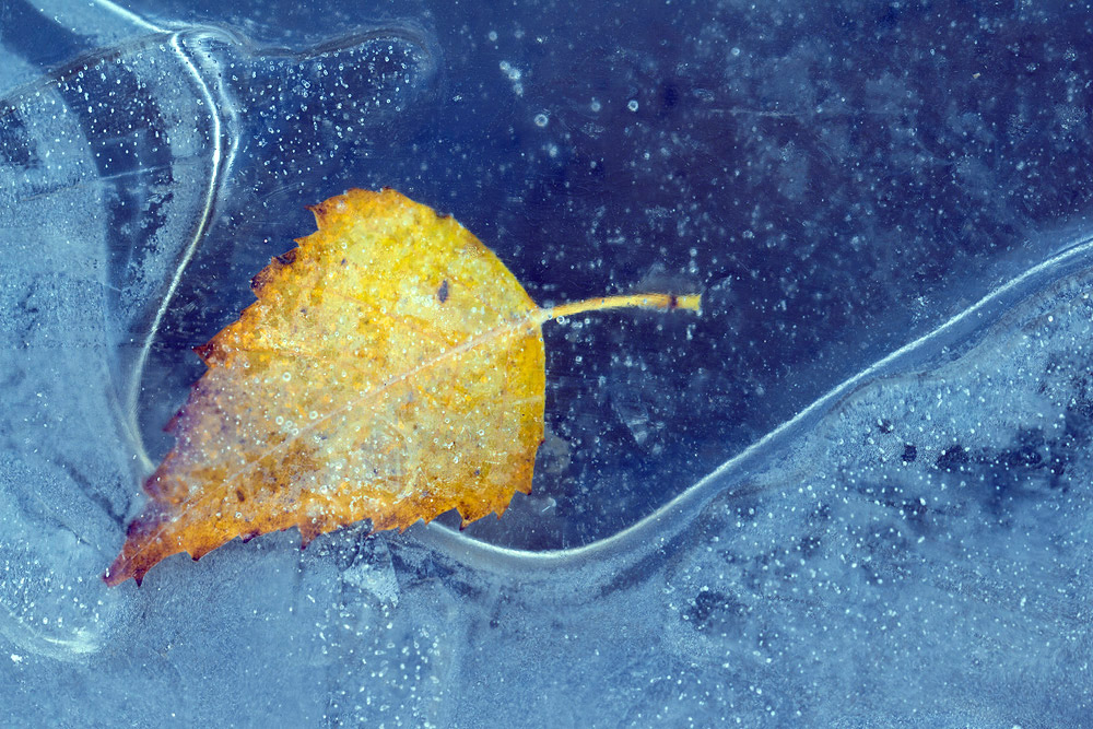 Konservierter Herbst
