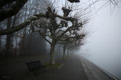 Konstanz-Nebel in der Seestrasse