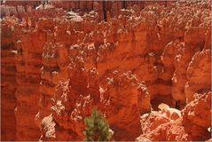 Kontraste Baum Canyon Ü300K