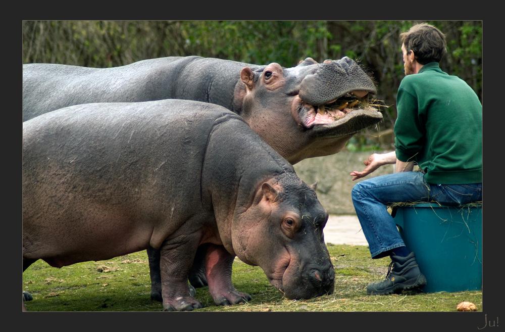 Konversation mit Flusspferden