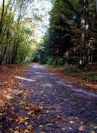 Kopfsteinpflaster im Herbst