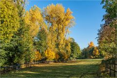 Koppel im Herbst